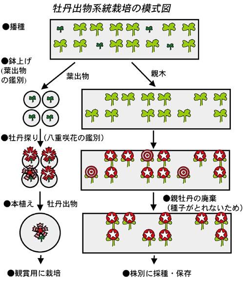 栽培方法(研究)